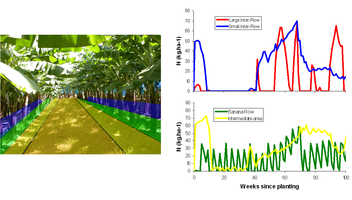 simulation of nitrogen content in different zone of te banana field